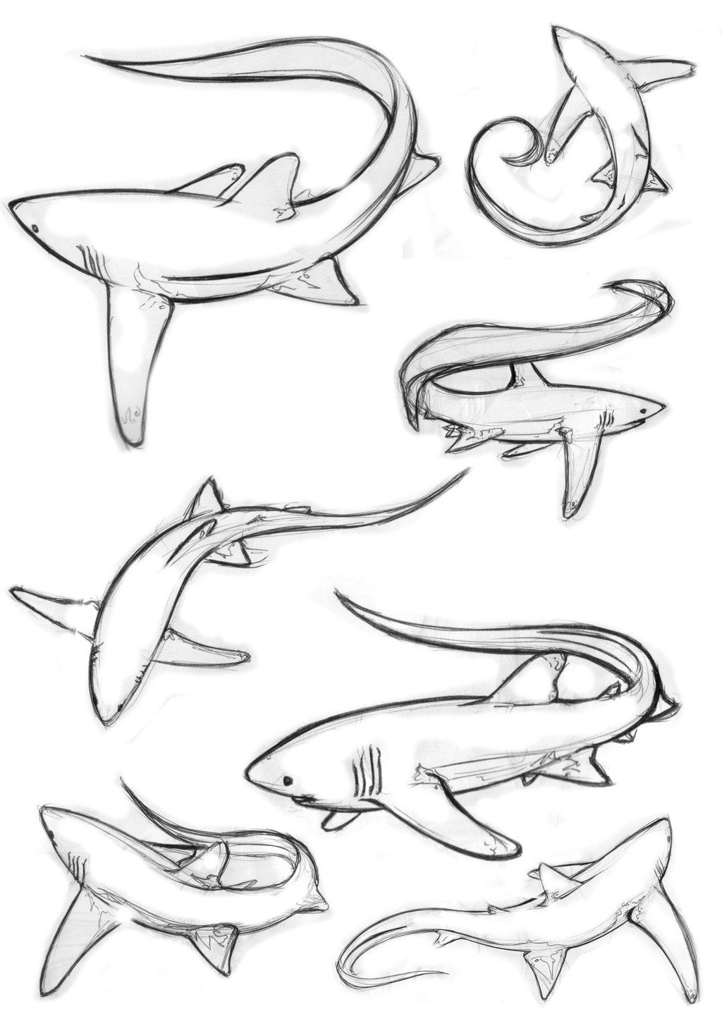 Bull Shark Coloring Pages Pictures Imagixs Kidscolorful Com Shark Coloring Pages Shark Art Shark Tattoos