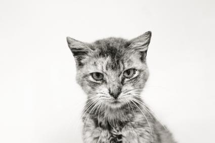 End Stage Feline Kidney Disease Lovetoknow Cat Skin Feline Cat Diseases