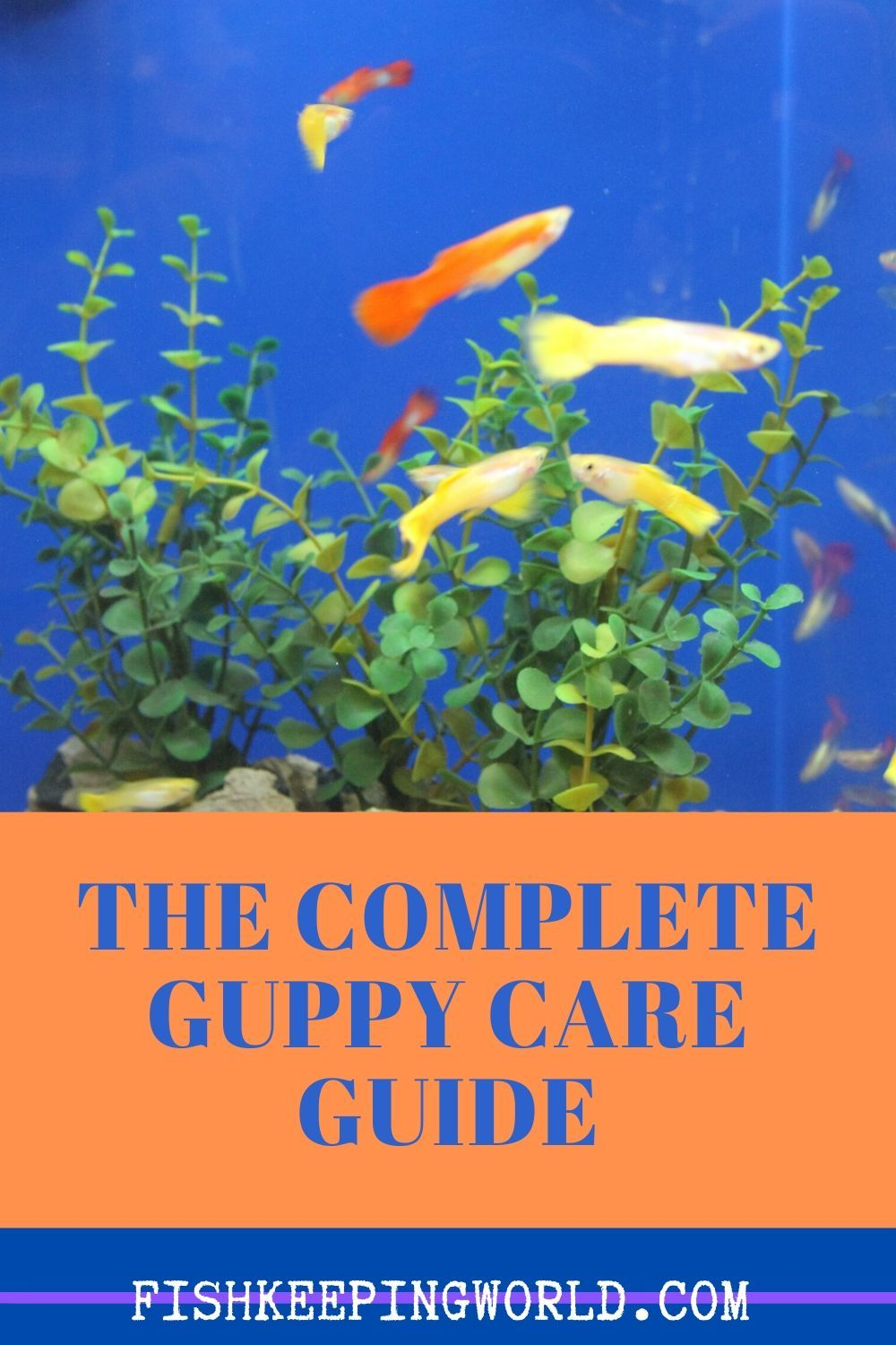 The Complete Guppy Care Guide 2020 Breeding Tank Requirements Fancy Varieties In 2020 Guppy Guppy Fish Tropical Fish Aquarium