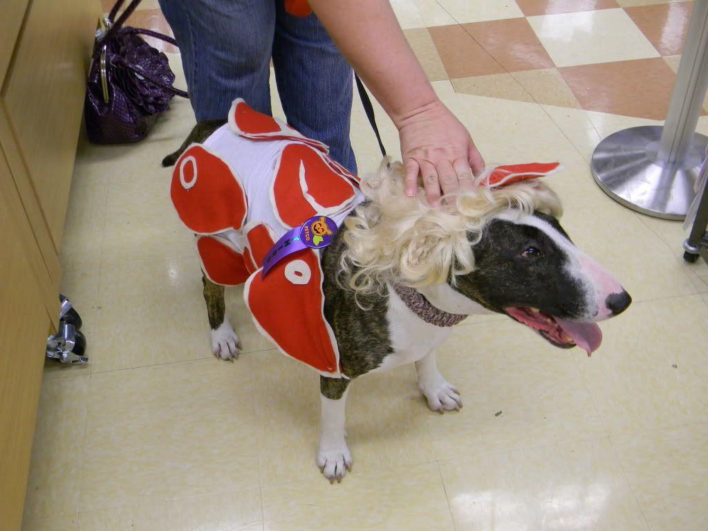 Pets Lady Gaga Meat Dress Costume For Dog Dog Halloween