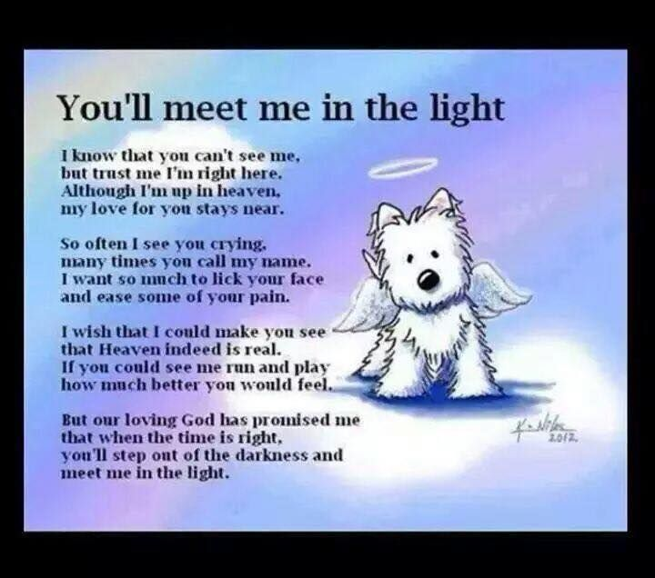 Makes me cry every time Pet loss quotes, Dog loss quotes