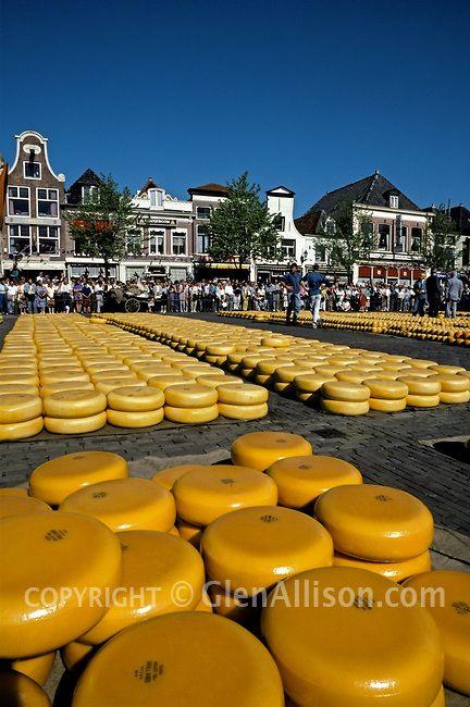 Ik hou van Holland: Geel op de Kaasmarkt van Alkmaar.