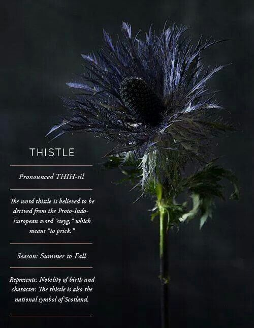 Thistle | Thistle flower, Flower meanings, Planting flowers