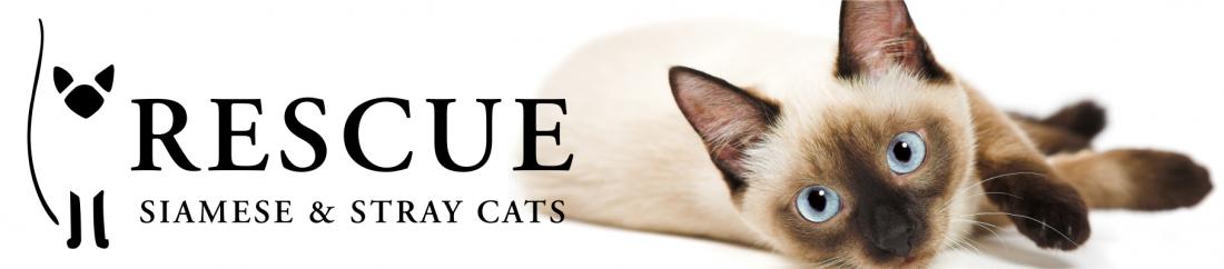 Available Cats Rescue Siamese Stray Cats Stray Cat Kitten Adoption Siamese