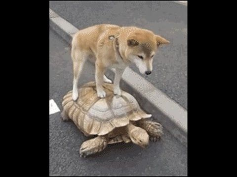 Image result for cute animals doing funny things