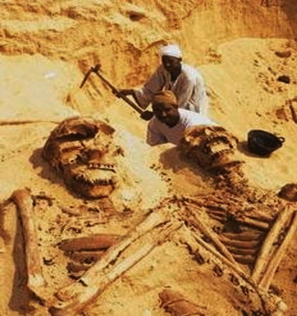giant human skeletons: petrified, 12 foot human giant discovered, Skeleton