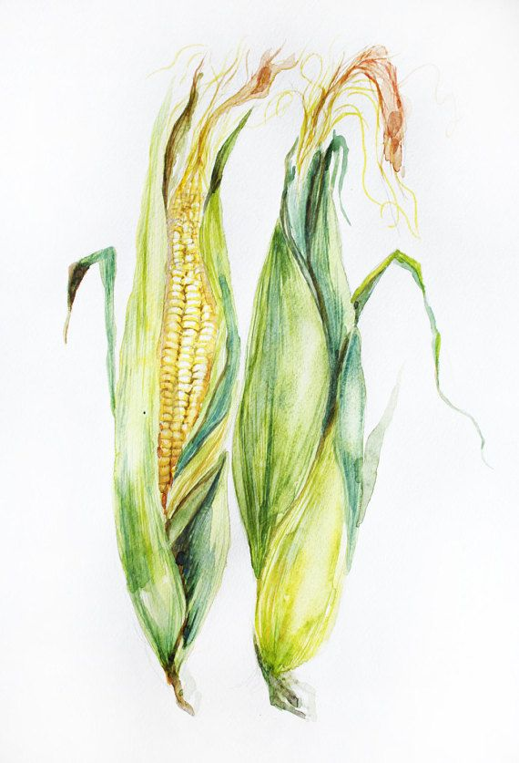 Original Watercolor Painting Corn Watercolor Art By Maryartstudio