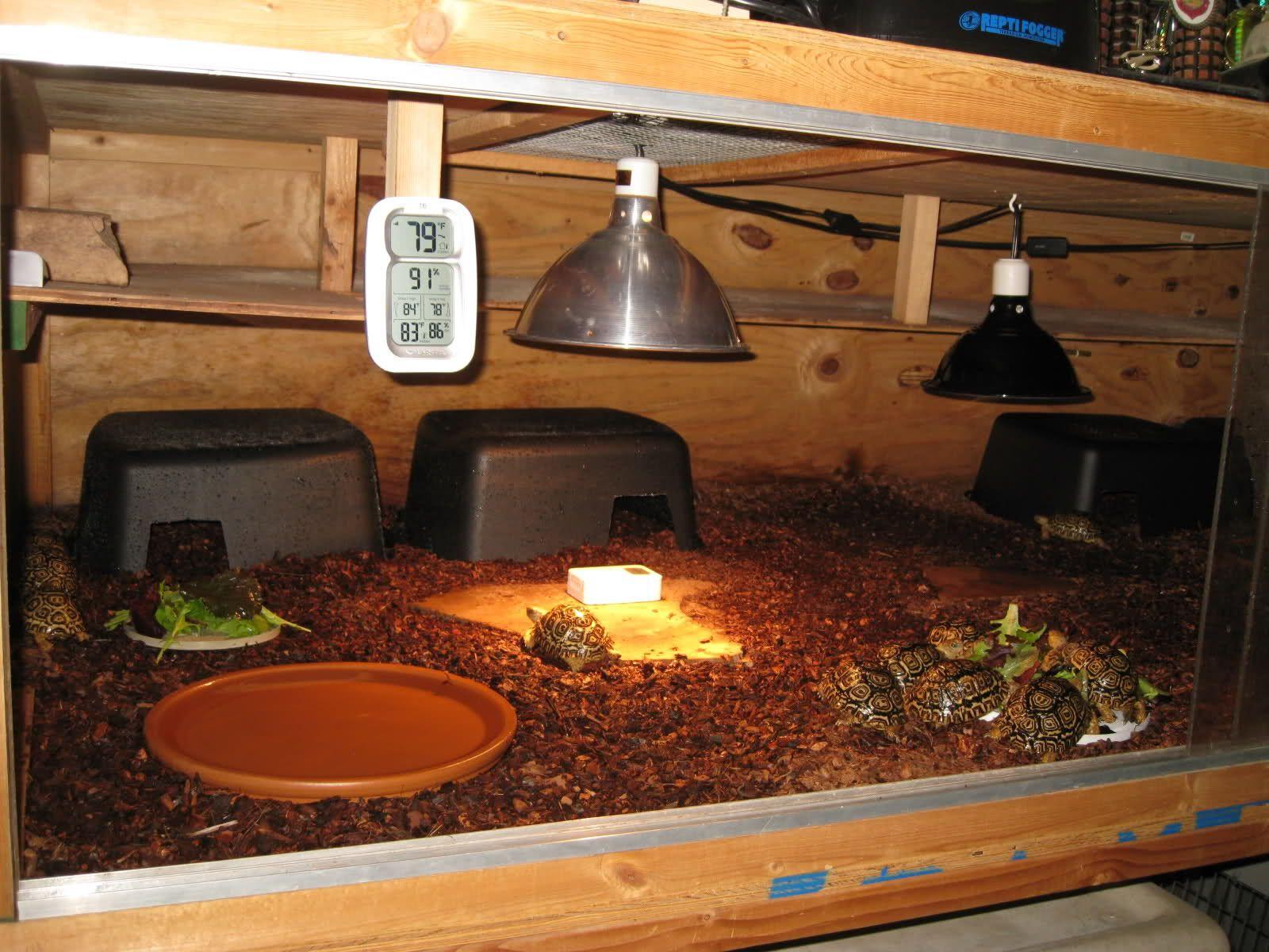 Closed chamber enclosuresa closed chamber tort enclosure helps to closed chamber enclosuresa closed chamber tort enclosure helps to retain humidity tortoise tabletortoise aloadofball Gallery