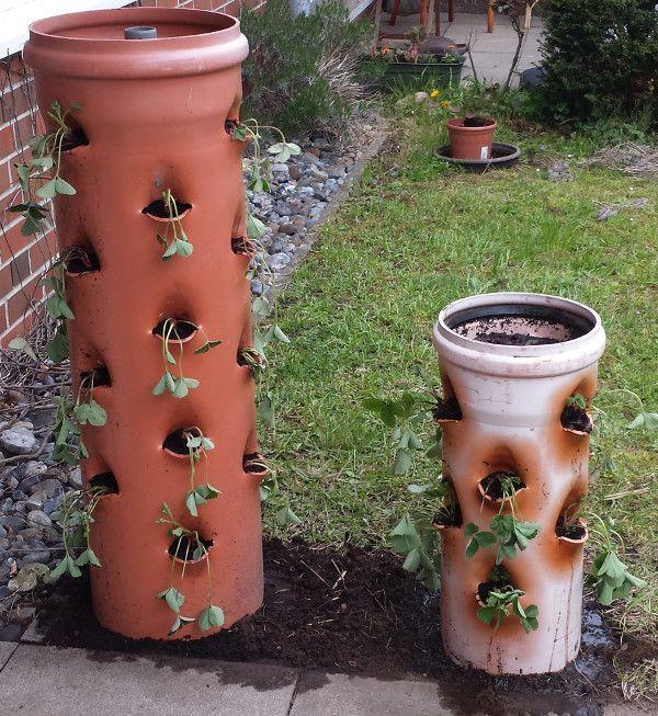 vertikales erdbeerbeet im kg rohr fr hjahrsdeko pinterest erdbeerpflanzen neues zuhause. Black Bedroom Furniture Sets. Home Design Ideas
