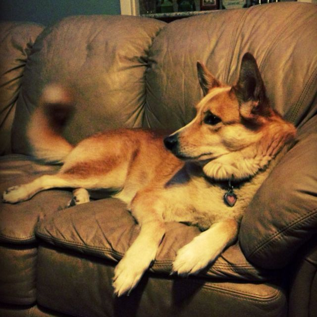 Most Beautiful Dingo Ever Cute Dogs Cute Animals Carolina Dog