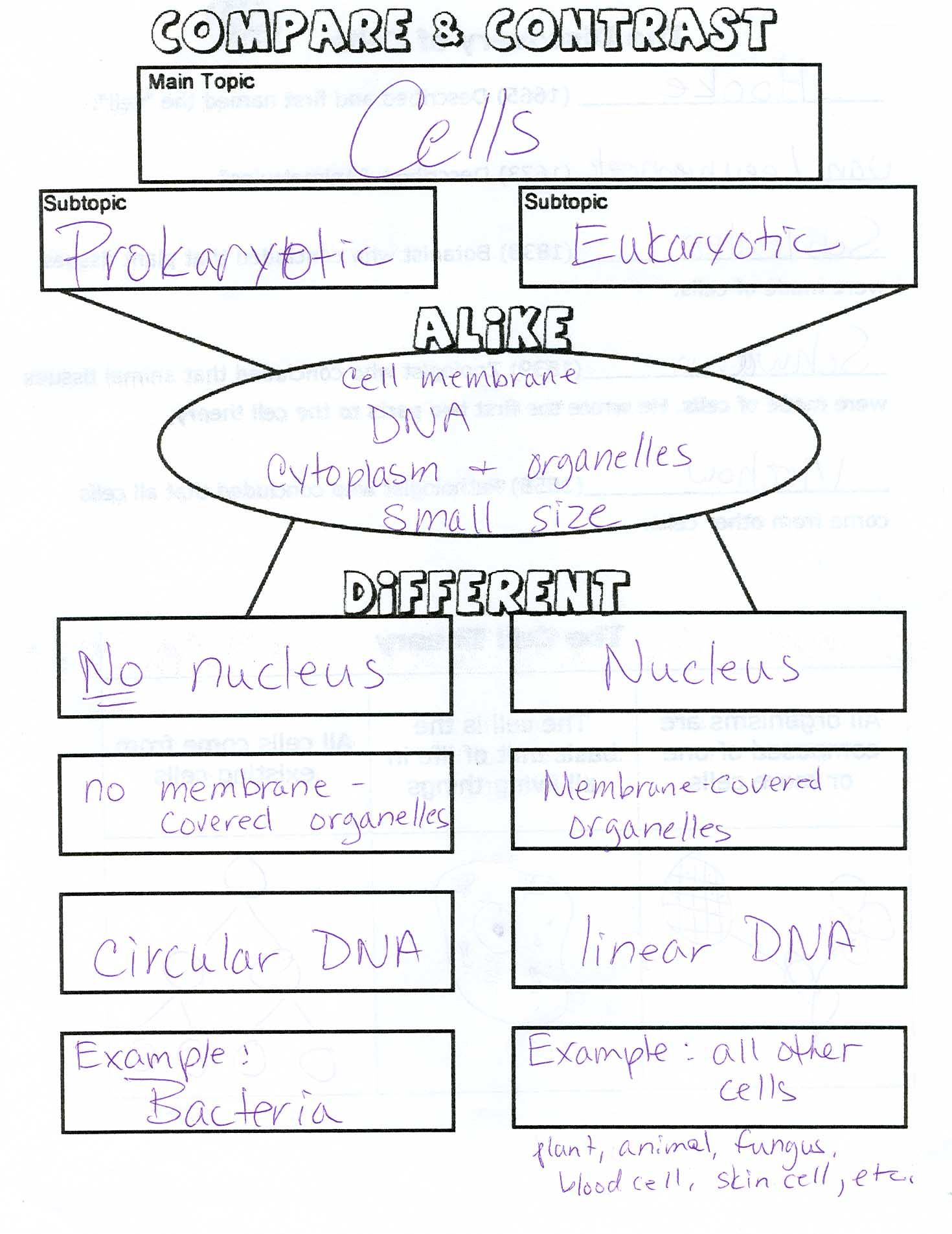 Worksheets Classifying Organisms Worksheet Waytoohuman
