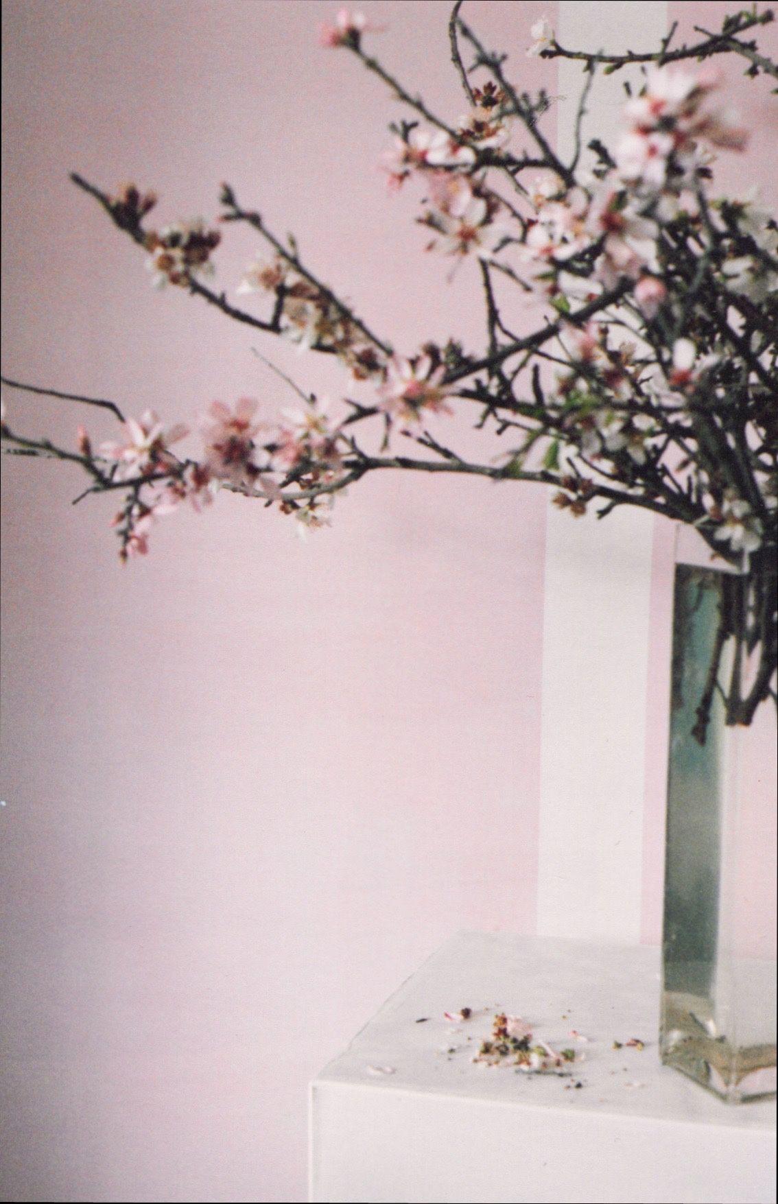 Bauwerk Natural Paint Lime Wash Bauwerk Pink Pinterest Lime  # Muebles Kautiva