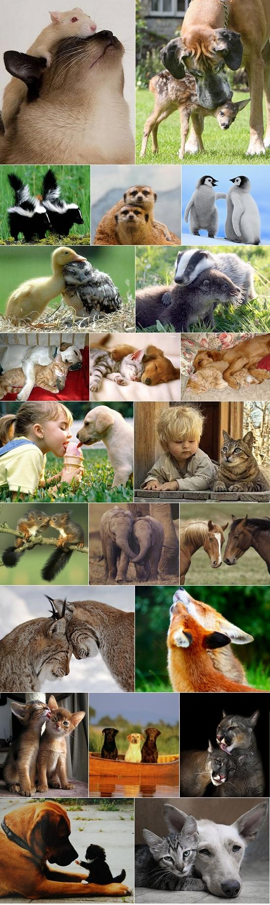 Friendship transcends species