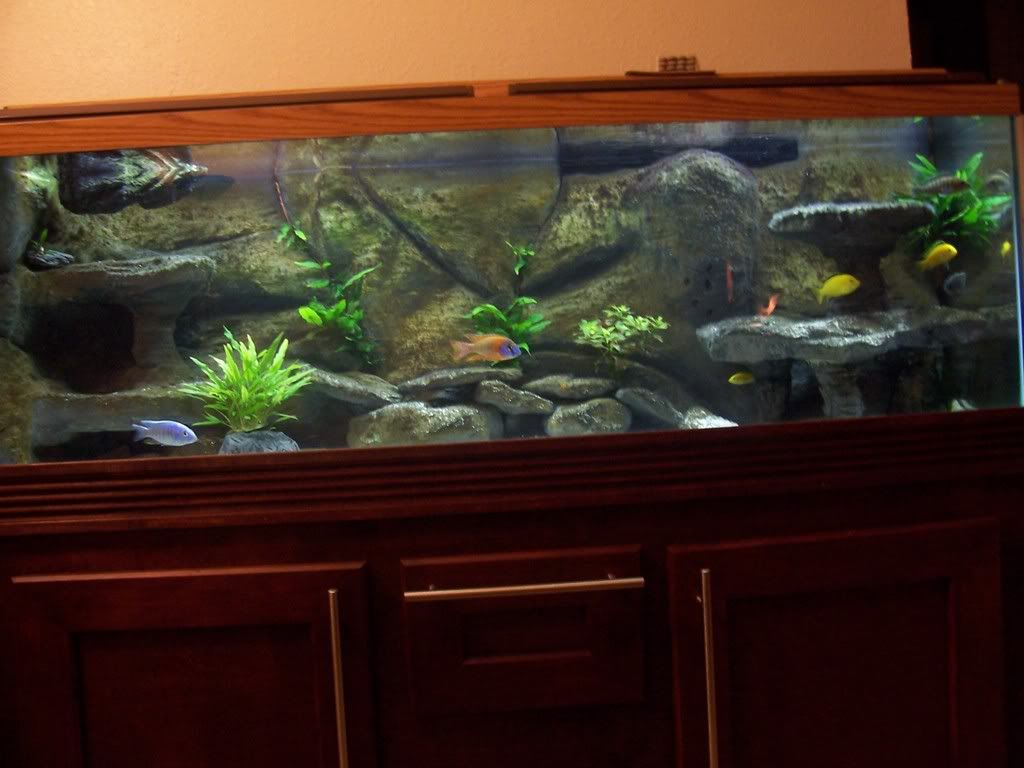 Image gallery homemade fish tank backgrounds for Diy fish tank