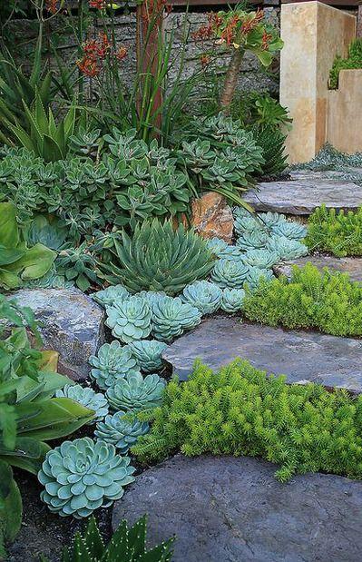 Shade Succulents Footpath Garden Inspo Pinterest Side