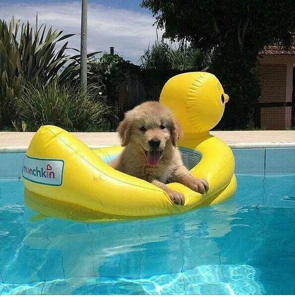 Hayvan Cute Animals Puppies Cute Dogs