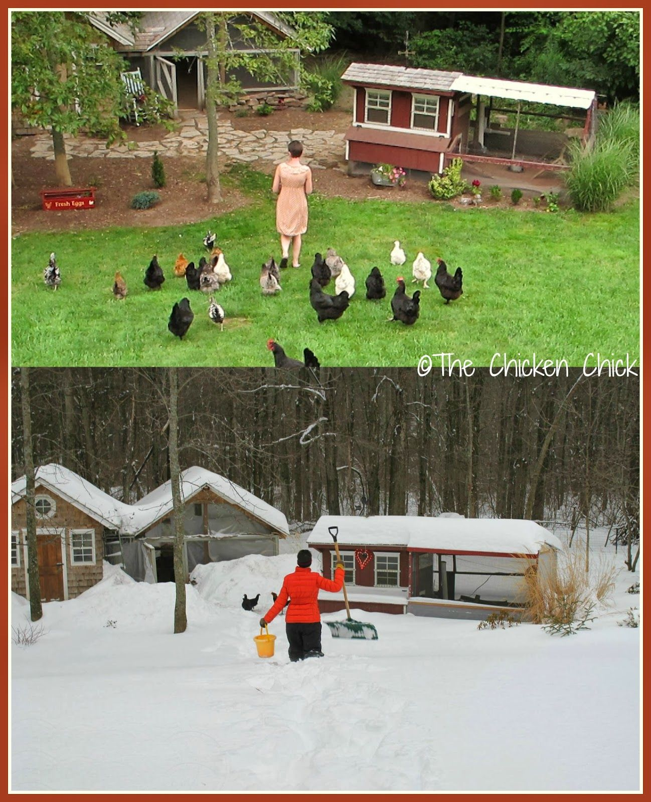 surviving winter with chickens gardens cold weather and my goals