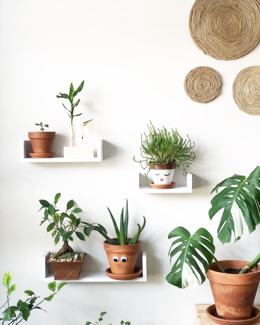 Plant family #houseplants | INDOOR PLANTS | Indoor plants ... on wrightsville house, american girl house, easy clean house, beach house, home small modern house, fluff house, palladium house, gearhead house, topper house, anthem house, the rat house, average house, perfect house, actual house, dibs house, uncomfortable house, reliance house, mattel house, idea house, immense house,