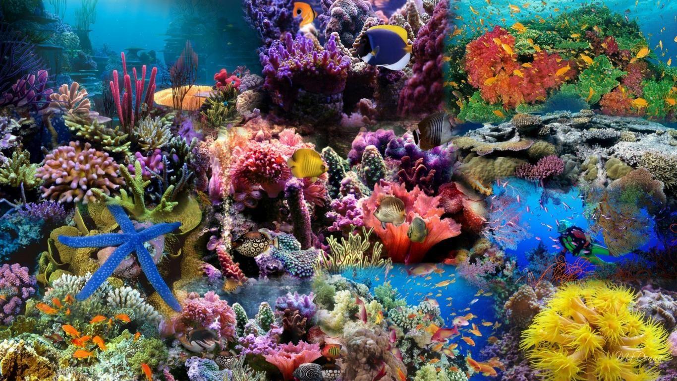 Cullogo Hd Wallpapers Images Photos Aquarium Backgrounds Fish Wallpaper Coral Reef