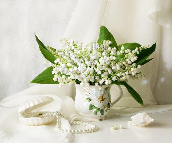 Resultats De Recherche D Images Pour Fleur Chinoise Porte Bonheur