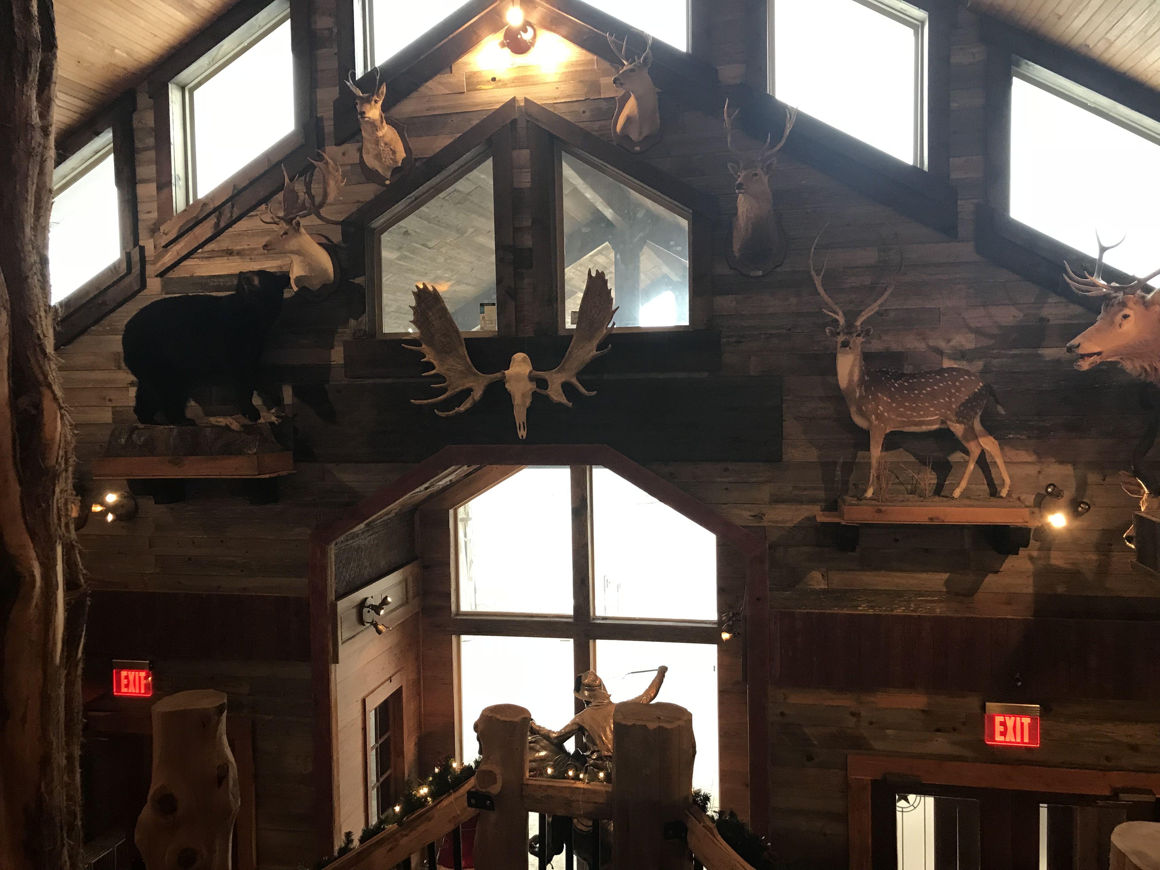 Pin by Antler Oaks Lodge on Fun at Antler Oaks Tower