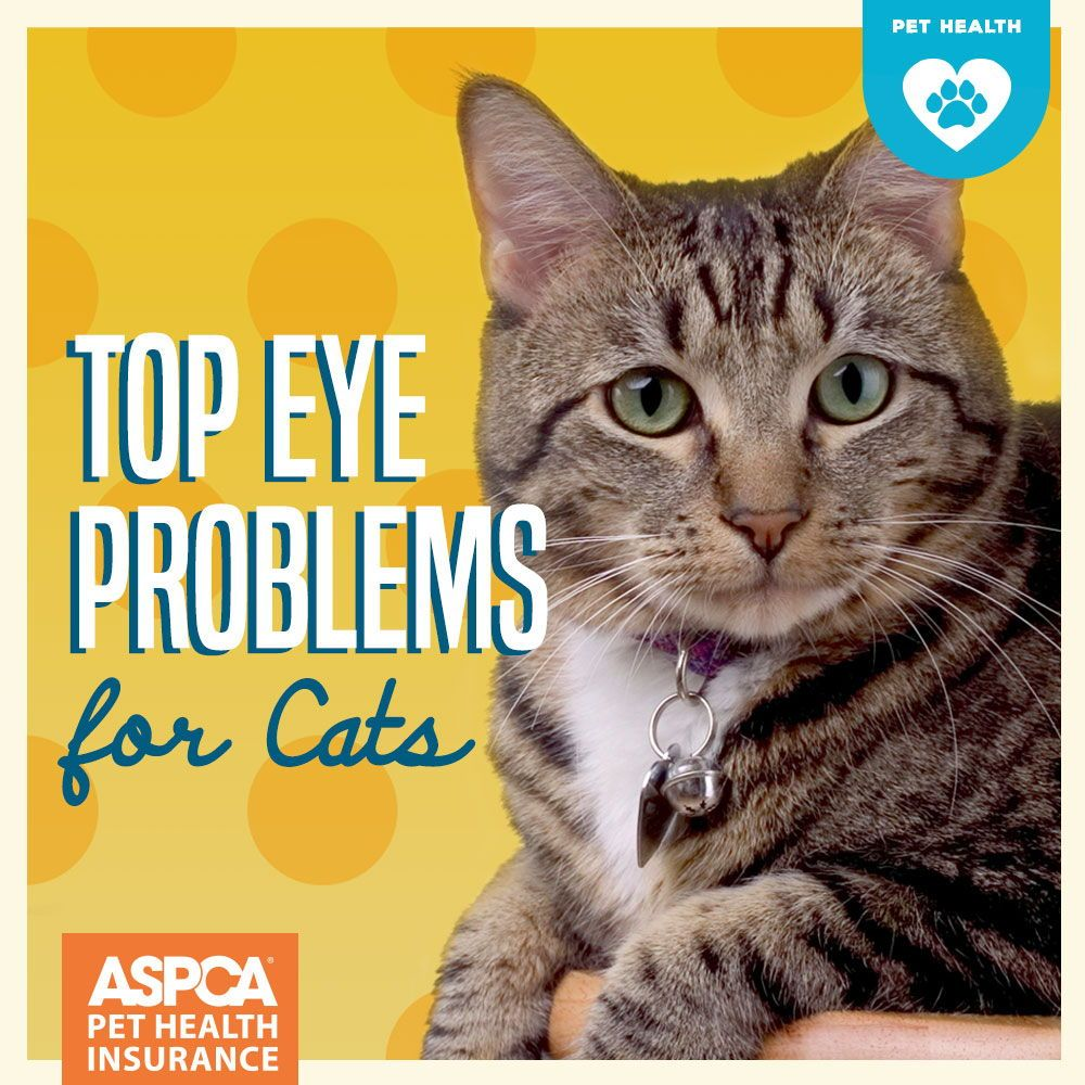 Top Eye Problems For Cats Cat Eye Problems Eyes Problems Cat Care