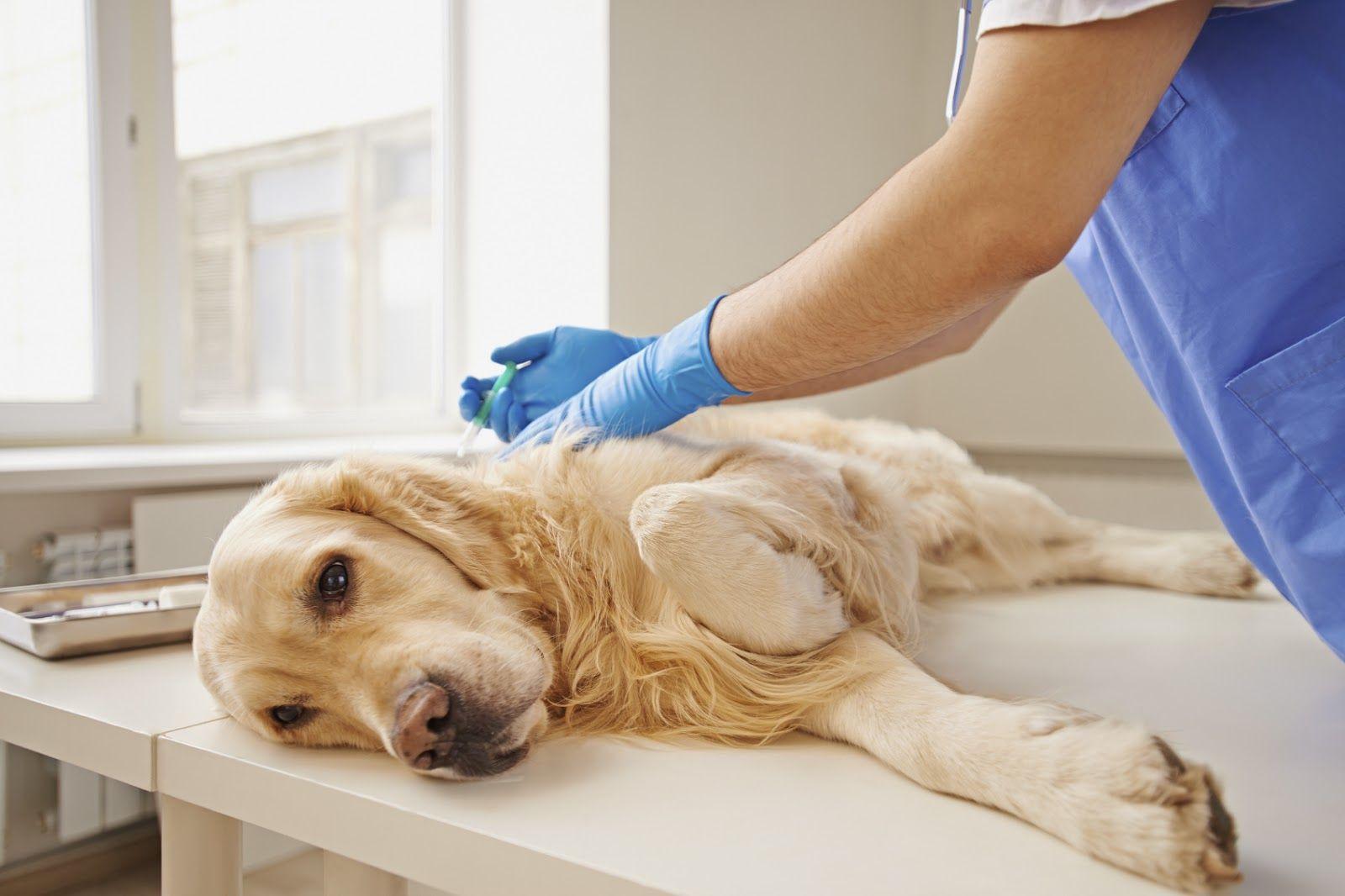 8 notions indispensables à savoir sur secourisme canins