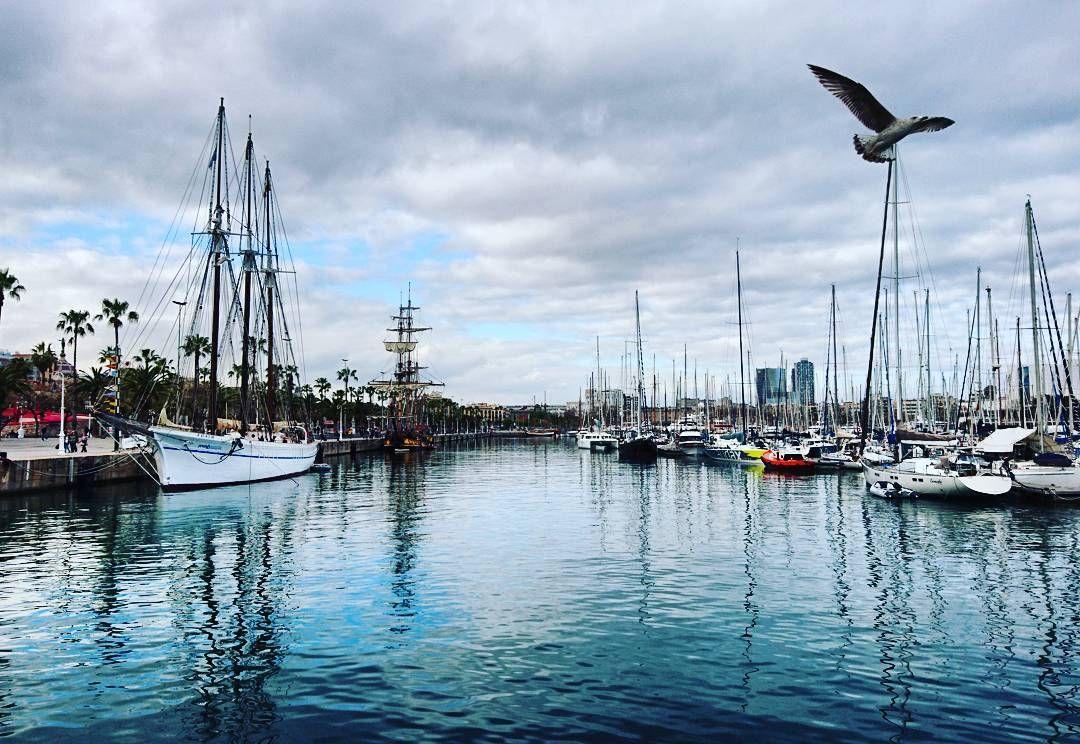 Strolling around in #barcelona #catalunya #seaside #seagull #marina #sailboat by primal_instinct