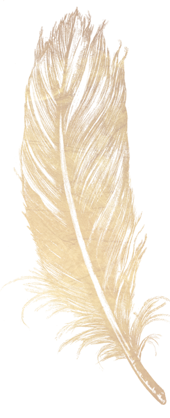 Gold Feather Png 245 600 Gold Feathers Old World Feather