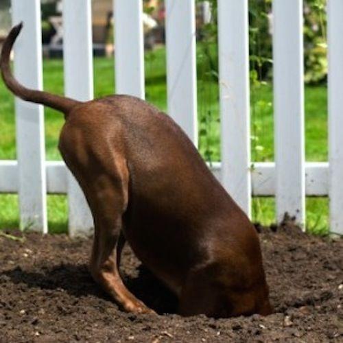 10 Stunning Wooden Fence Posts 150 150 Ideas 150 150 Cheapdogkennelideasou In 2020 Wooden Dog Kennels Wooden Fence Posts Cheap Dog Kennels