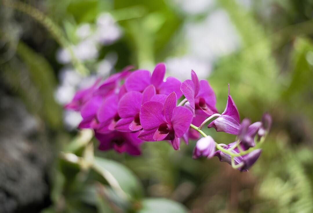 ucto love and be lovedud quotes orchid