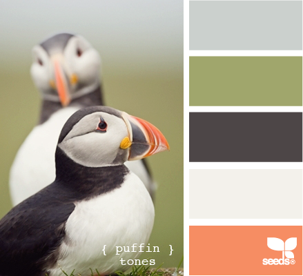 puffin colors... love love that coral-y color with the deep purple-y blue and the green and the gray.  The birds are beautiful too!!!!