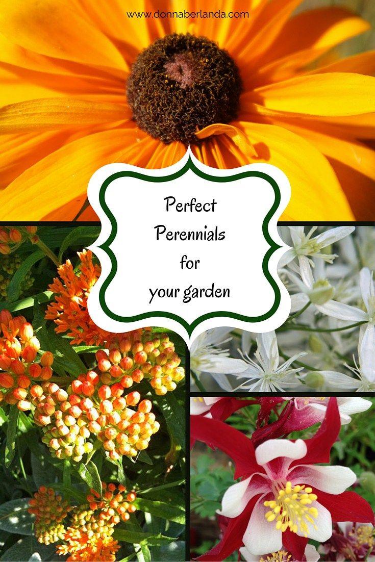 Perfect Perennials for Your Garden Perennials Gardens and