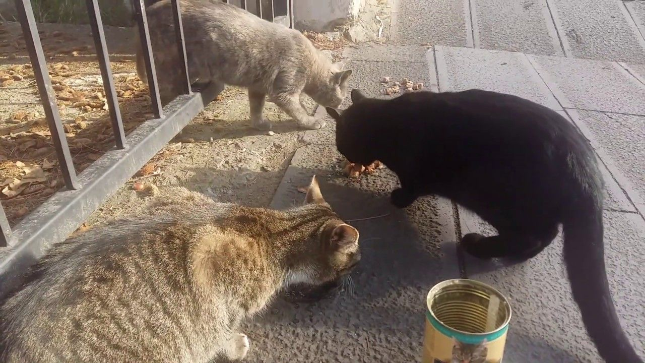 Stray Cats Eat Wet Cat Food For The First Time Cute Cats In 2020 Cute Cats Wet Cat Food Best Cat Food