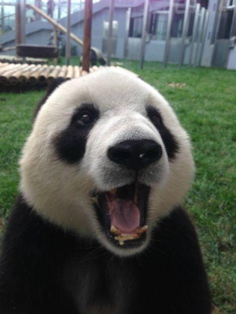 Mail Mary Parham Outlook Cute panda, Panda, Panda day