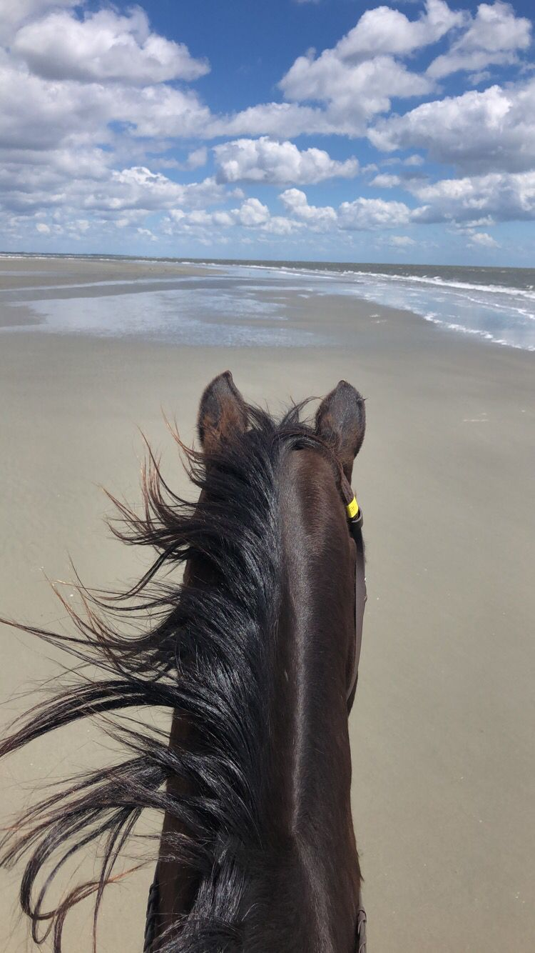 Beach Ride On Seabrook Island Beach Rides Beautiful Horses Photography Pretty Horses