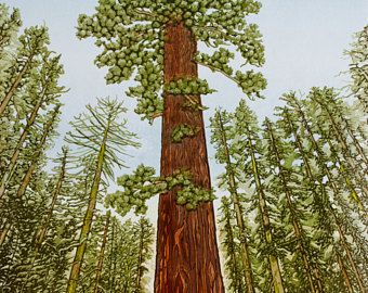 Giant Sequoia Linocut Print 26 X 18 Redwood Tree Yosemite National Park Vibrant Color