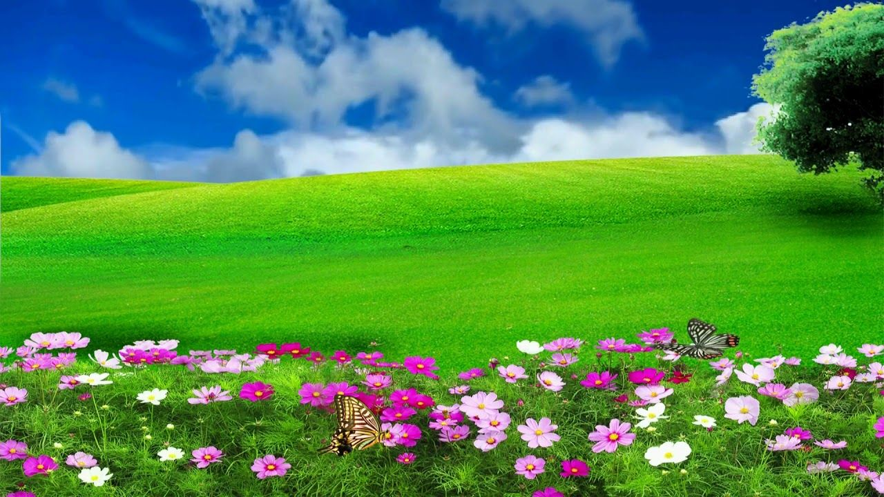 Hd 1080p Nature Flower Scenery Video Royalty Free Landscape Video 573 Green Background Video Green Screen Video Backgrounds Photoshop Backgrounds
