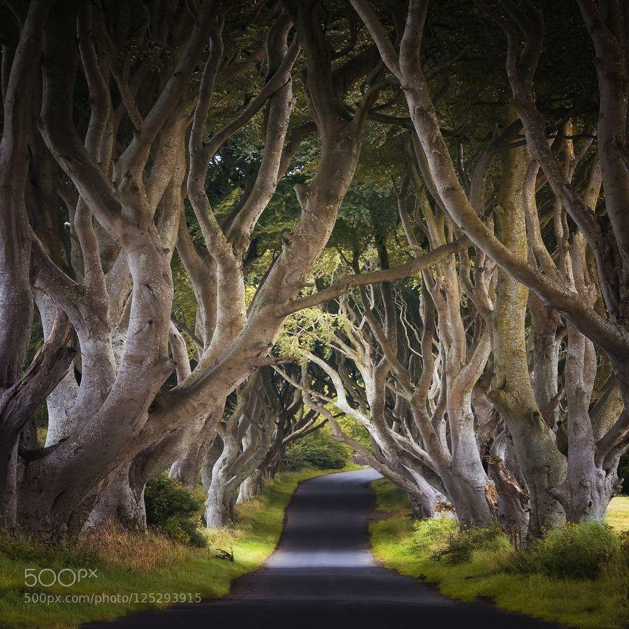 Mystic dark hedges by carstenmeyerdierks please like http