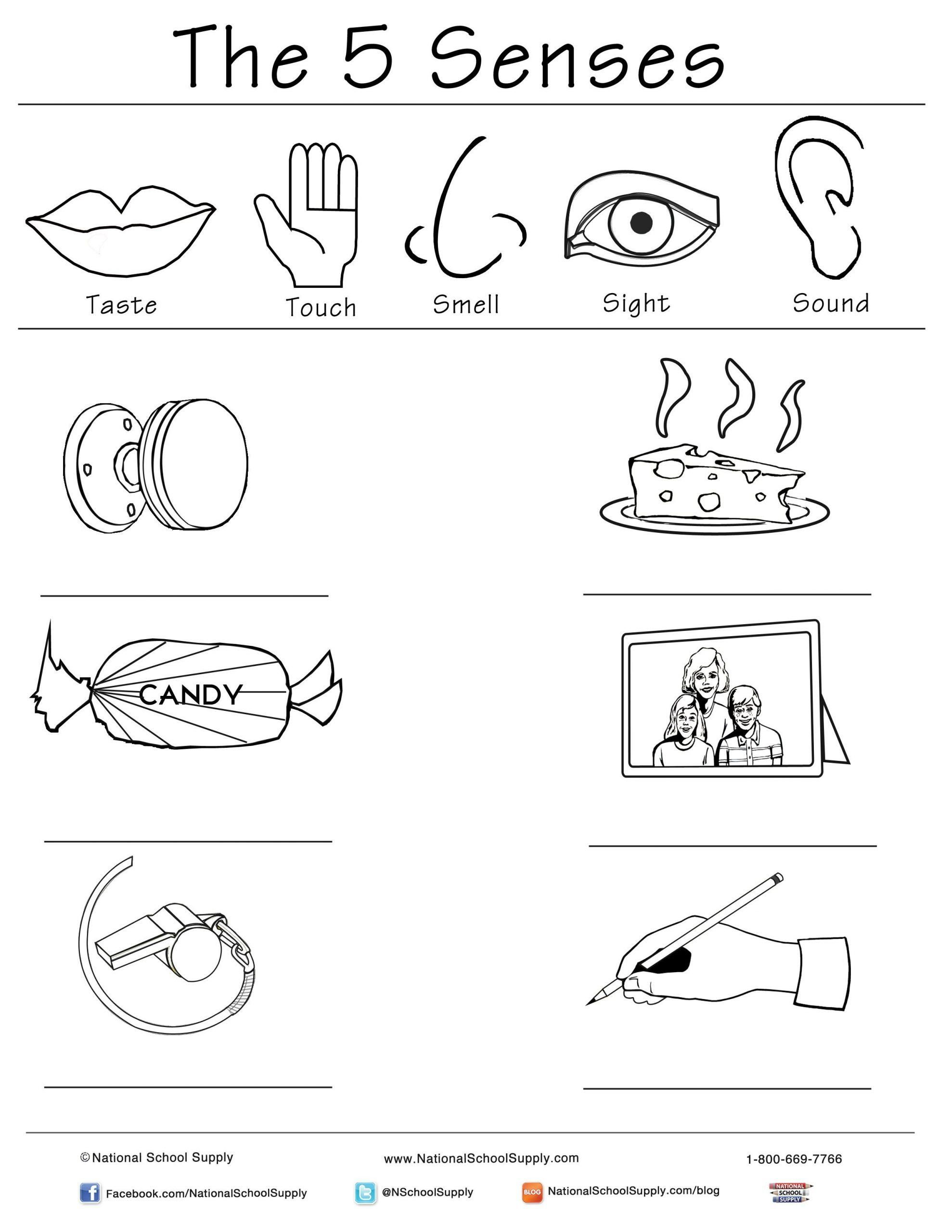 5 Senses Worksheets For Kindergarten 28 5 Senses
