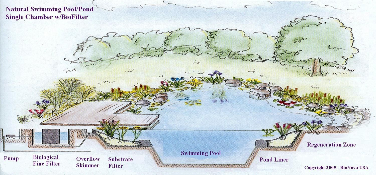 Here Is A General Blueprint Of How A Natural Pool S Filtration