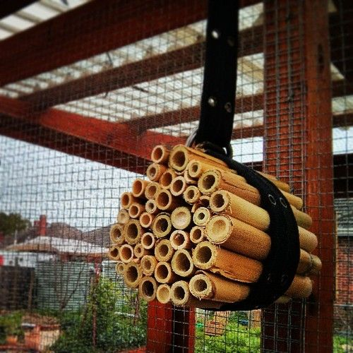 Home made bug hotel in less than 10 mins using gleaned bamboo  recycled belt #urbanfoodgarden