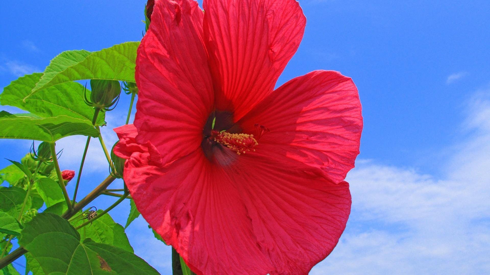 Epingle Par Antcliff Henderson Sur Flowers Wallpapers Images Cachees
