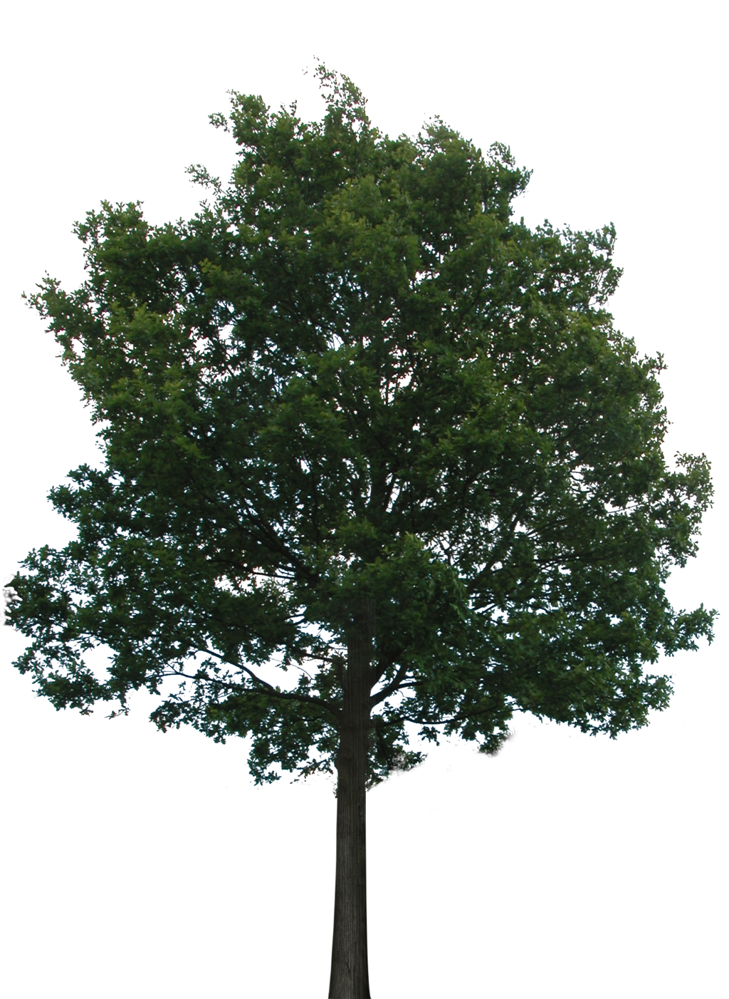 Tree 1 Png With Transparency Tree Photoshop Plants Garden Illustration