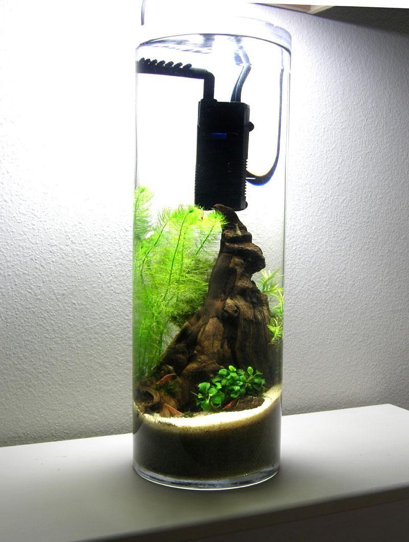 Toms mini filter w mod spray bar in a 4 gallon 7 diam x for Glass fish tank