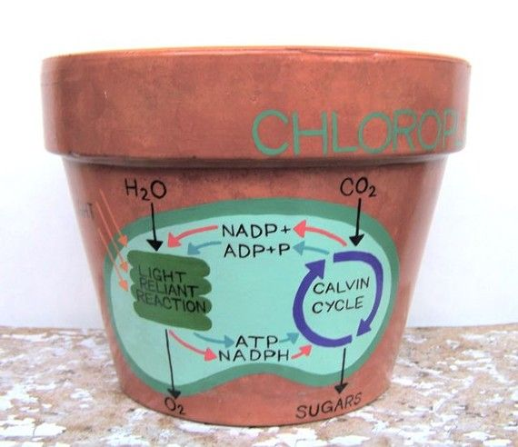 Chloroplast photosynthesis diagram flower pot by barnabyhuxley chloroplast photosynthesis diagram flower pot by barnabyhuxley ccuart Image collections