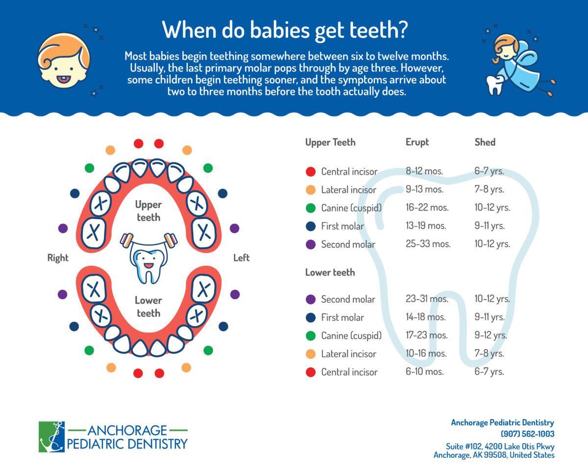 Baby teething chart baby teeth baby teething chart