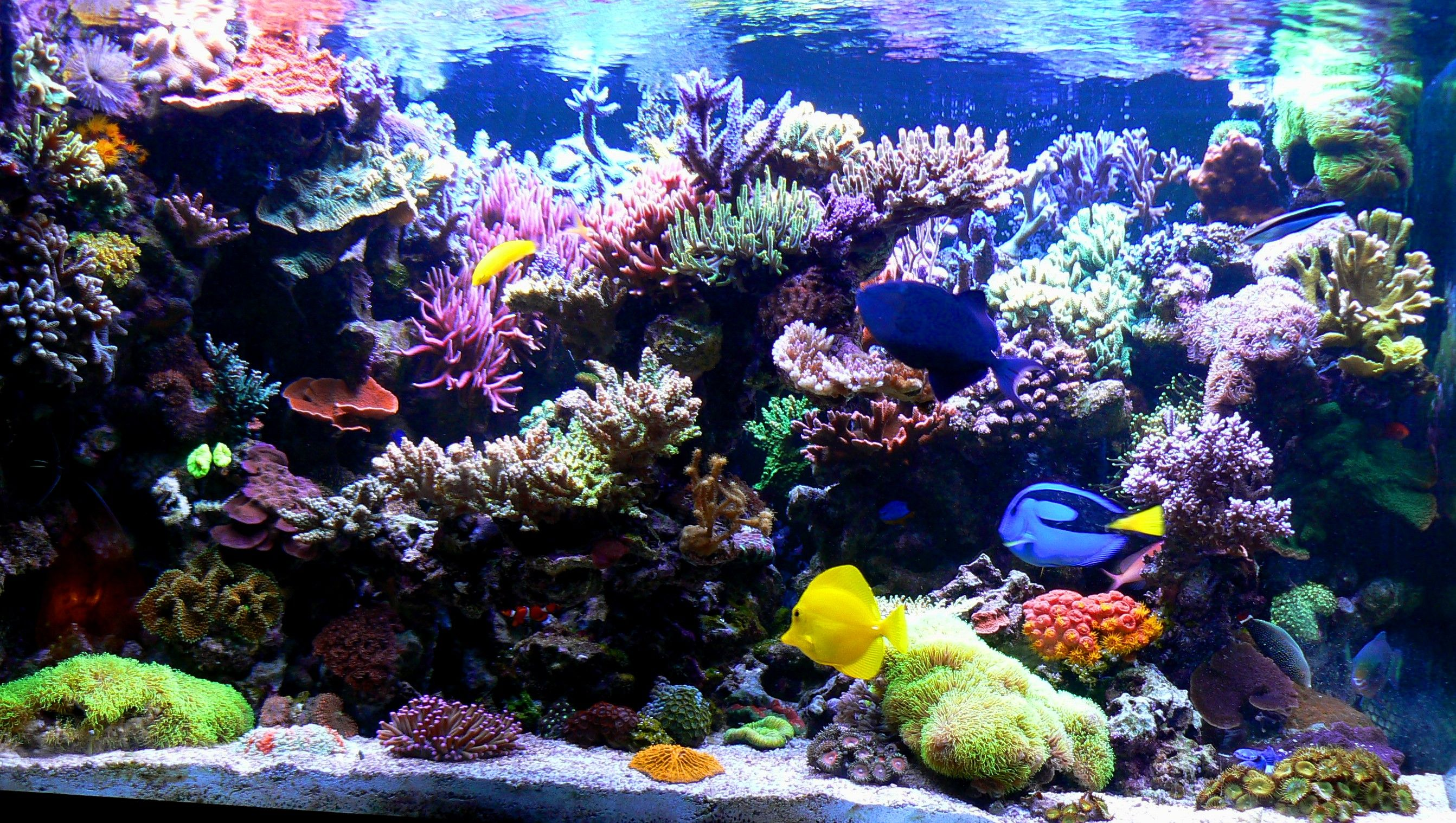 Temperature Probes Aren T Infallible Have You Checked Yours Lately Check Out This Member S Discovery On R2r Nano Reef Tank Reef Tank Reef Aquarium