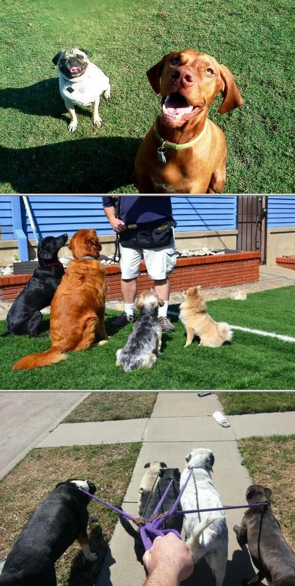 Larry Preston Offers One Of The Best Dog Training Services