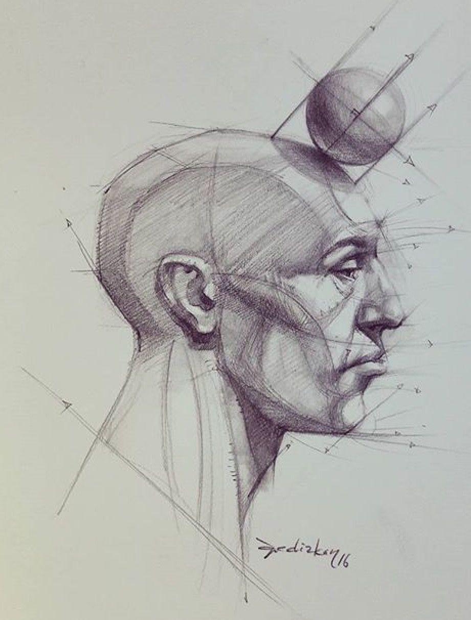 Head. Anatomy. Male. | Anatomy/Tutorials | Pinterest | Anatomy ...